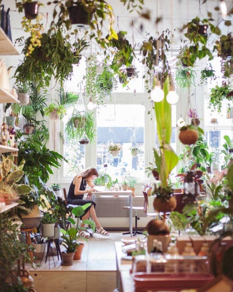 Kamerplanten Kopen Amsterdam.Home Wildernis