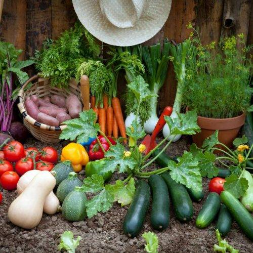 All you need to basics for Planting a Vegetable Garden: sun, soil & seeds. All in one guide.